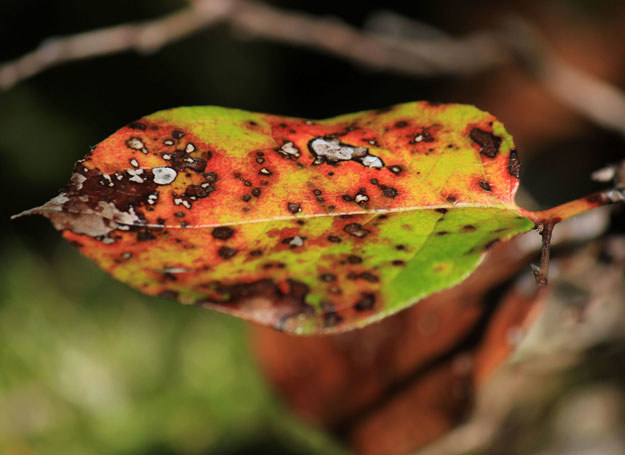 Przeczytaj, jak walczyć z chorobami roślin /©123RF/PICSEL