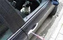 Przed kradzieżą najlepiej zabezpiecza ... pies! /INTERIA.PL