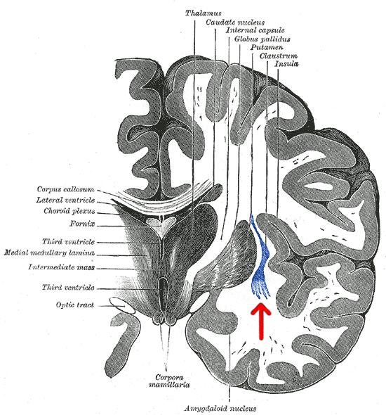 Przedmurze (łac. Claustrum) wskazane czerwoną strzałką /Wikipedia