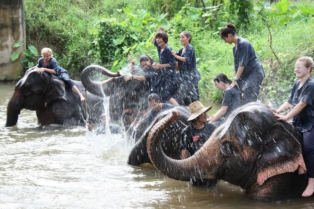 Przejażdżka na słoniach - jedna z atrakcji w Tajlandii /123/RF PICSEL