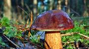 Przetwory z grzybów
