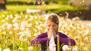 Przeżyj wiosnę z alergią