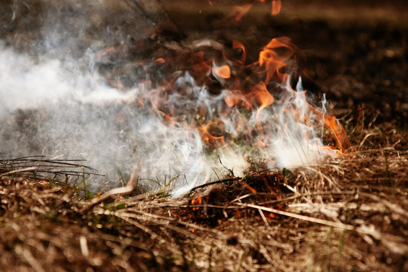 Przyczyną gigantycznych pożarów w USA nie jest globalne ocieplenie, a wiatry? /123RF/PICSEL