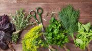 Przydomowy ogródek ziołowy
