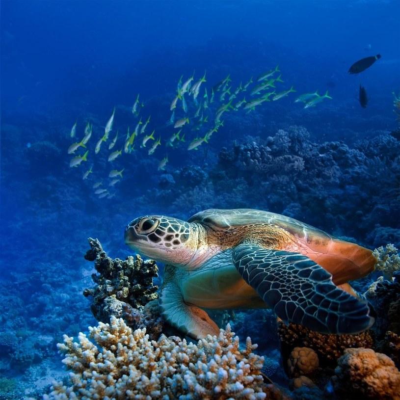 Przyroda Malediwów, fot. Travelplanet /materiały prasowe