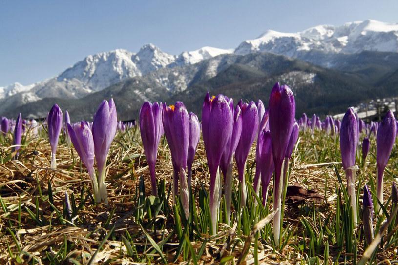 Przyroda najpiękniej rozkwita w Tatrach /East News