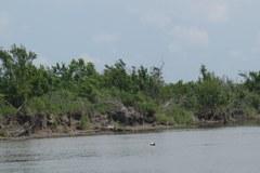 Przyroda u wybrzeży Luizjany - jeszcze nieskażona
