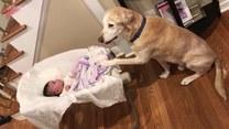 Psi brat opiekuje się swoją młodszą siostrą