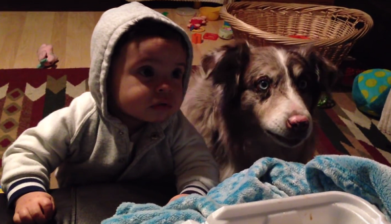 Psiak okazał się mądrzejszy od dziecka! /Sam Giovanini /YouTube