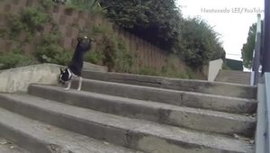Psiaki, które nie radzą sobie ze schodami