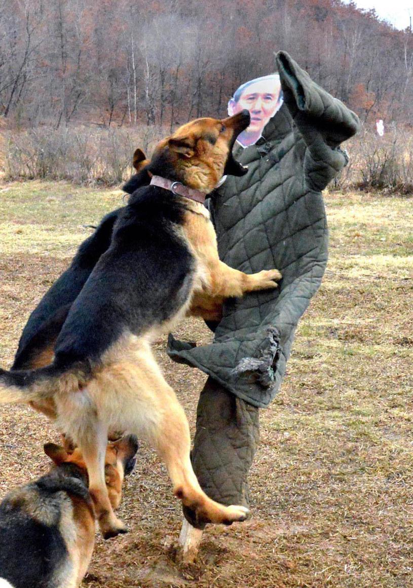 Psy atakują kukły z wizerunkiem ministra /AFP