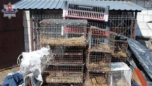 Psy i bydło w dramatycznych warunkach. Interweniowała policja