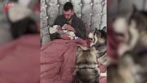 Psy poznają nowego członka rodziny. Są nim zauroczone