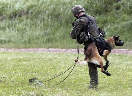 Psy-spadochroniarze służą już w armii niemieckiej. Ciekawe, kiedy nasze wojsko pójdzie tym tropem? /AFP