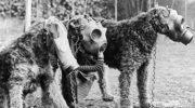 Psy w czasie II Wojny Światowej
