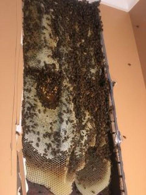 Pszczoły z Hillside /fot. Mickey Hegedus /materiały prasowe