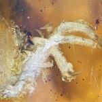 Ptak sprzed 100 mln lat