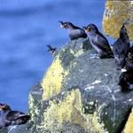 Ptaki, które pachną cytrusami