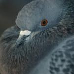 Ptaki mają poczucie czasu i przestrzeni