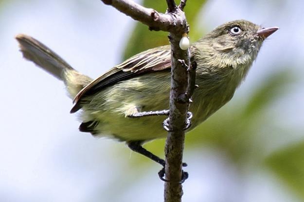 Ptaki są mądrzejsze niż się wydaje /AFP