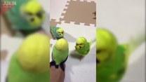 Ptaszki dały się oszukać. Ale tylko przez chwilę