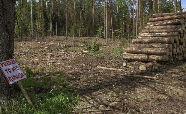 Puszcza Białowieska i reparacje wojenne od Niemiec. Co czeka nas w polityce?
