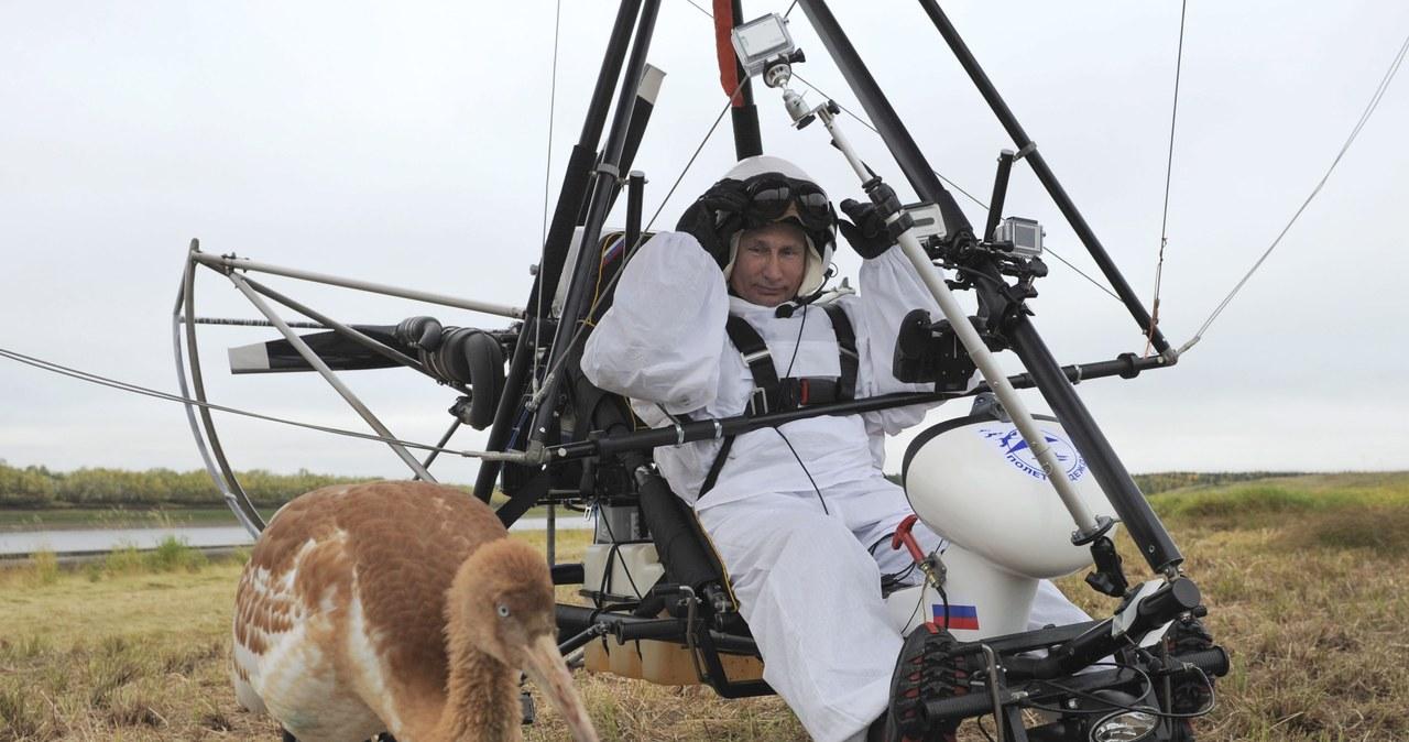 Putin przewodnikiem stada żurawi