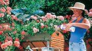 Rady dotyczące pielęgnacji ogrodu w doniczkach