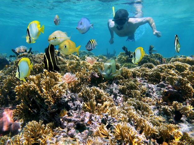 Rafy koralowe zachwycają /123/RF PICSEL