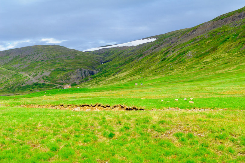 Region Strandir na Islandii /123RF/PICSEL