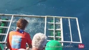 Rekin wpadł do ochronnej klatki