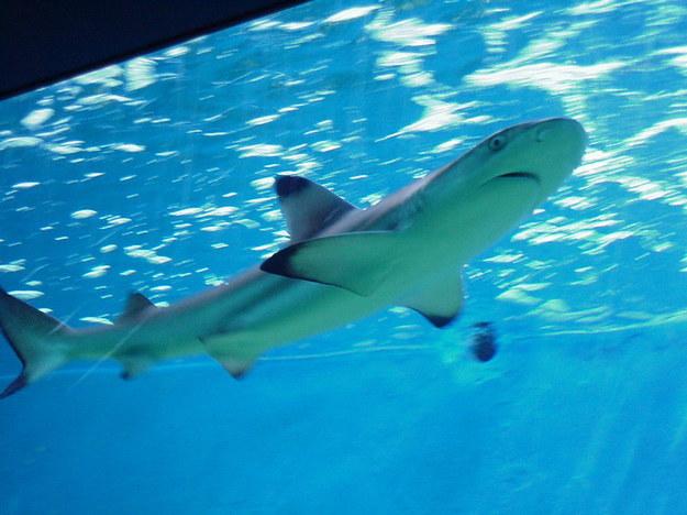Rekin zaatakował mężczyznę na Bahamach /RMF