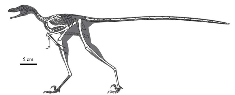 Rekonstrukcja szkieletu nowo odkrytego dinozaura Zhongjianosaurus yangi /fot. Vertebrata PalAsiatica /materiały prasowe