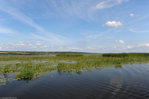 Rezerwat Przyrody Jezioro Druzno/fot. Gerard /Reporter