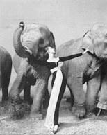 Richard Avedon, Dovima i słonie, 1955 /Encyklopedia Internautica