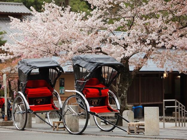 Riksze i kwitnące wiśnie w Kioto /123/RF PICSEL