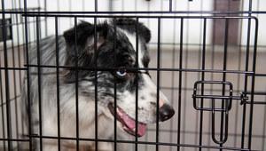 RMF24: 4-latka pogryziona przez psy