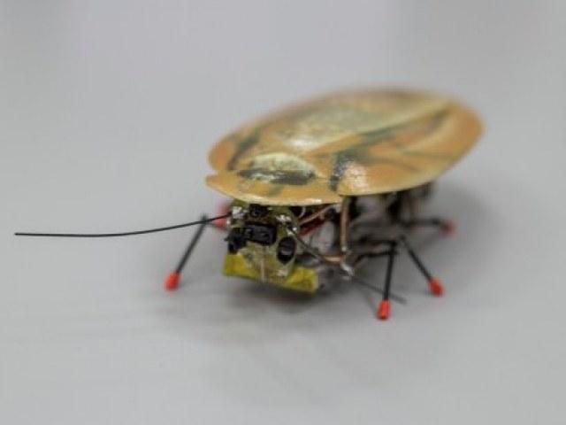 Robot-karaluch opracowany przez Rosjan /materiały prasowe