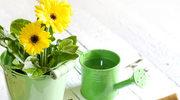 Rok w ogrodzie: Jak dbać o rośliny?