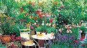 Rośliny dla miłośników zapachów
