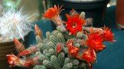 Rośliny dla singli