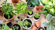 Rośliny jak filtr powietrza
