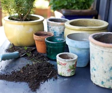 Rośliny, które mogą cię uszczęśliwić