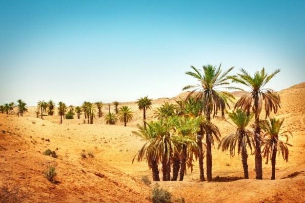 Rośliny na Saharze możliwe nie tylko w oazach /123RF/PICSEL