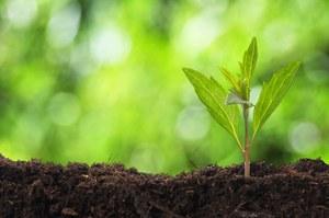 Rośliny w elektronice?