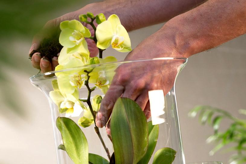 Rośliny w szklanych naczyniach prezentują się niezwykle efektownie /East News