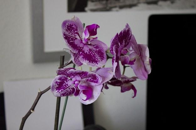 Rośliny zastąpią drogie dekoracje wnętrza /©123RF/PICSEL
