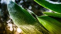 Rośliny żółkną? Powodem nie zawsze jest brak wody