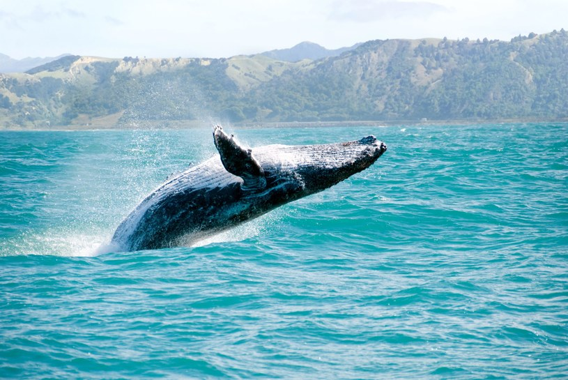 Również wieloryby spędzają tu romantyczne wakacje /123RF/PICSEL