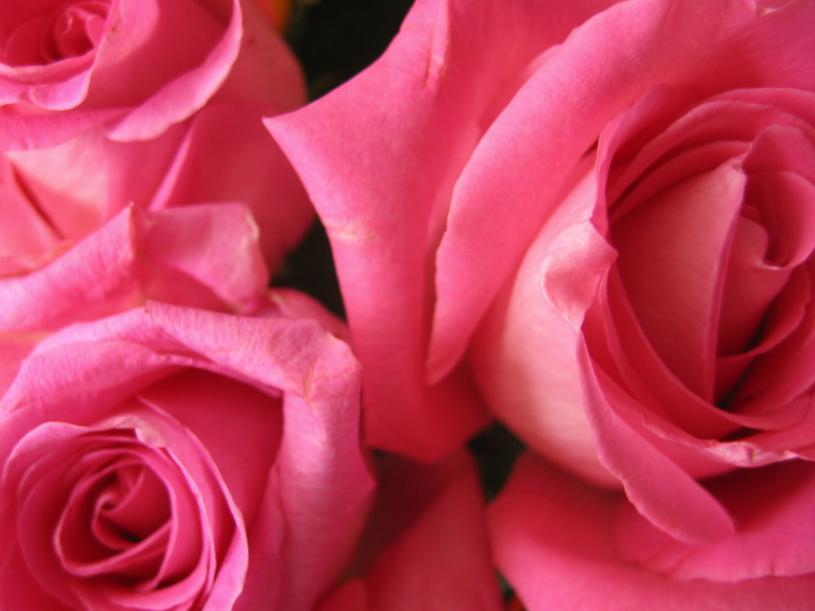Róża łagodzi podrażnienia skóry i relaksuje  /© Bauer